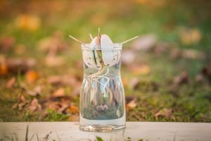 avocadopit ontkiemt in glas water tot avocadoboom