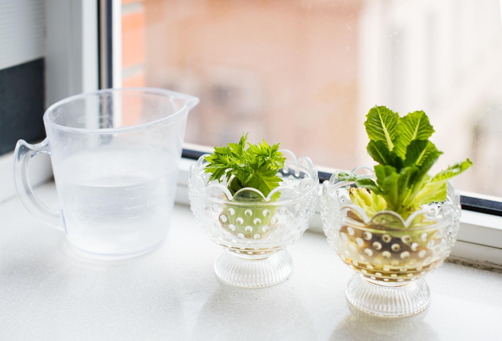 stronk van sla en bleekselderij groeien in glas water