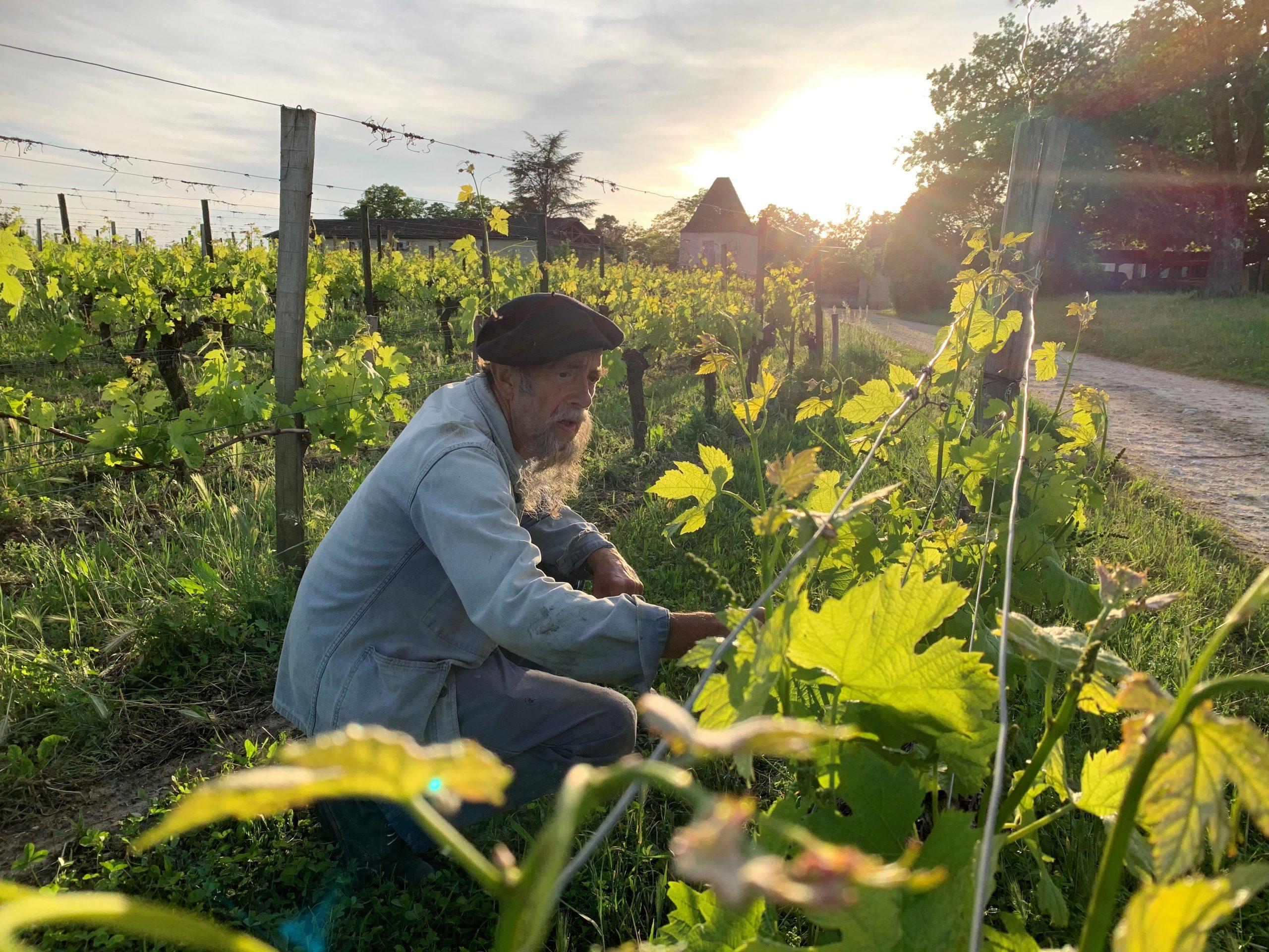 Wijnboer Ilja Gort bij wijngaarden