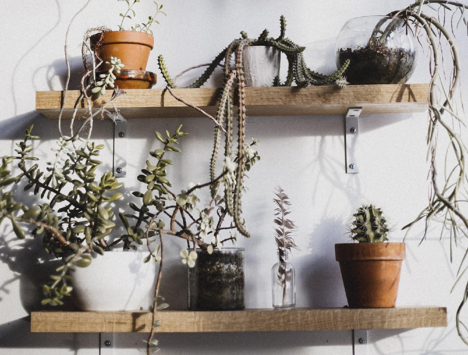 Planten in plantenasiel